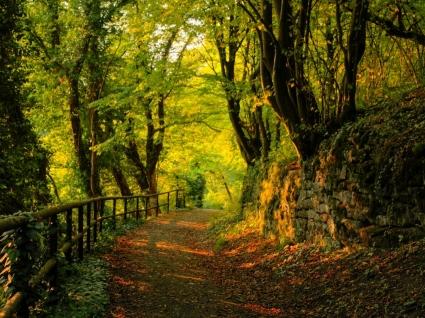 https://www.mondorama.eu/wp-content/uploads/2021/02/autumn_wallpaper_autumn_nature_wallpaper_1267.jpg